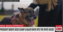 CNN Doggedly Reports On Biden Pooches